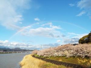 雨上がりの虹の空
