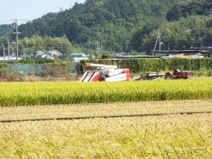稲刈りの風景2